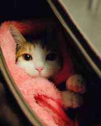 猫吃巧克力会怎么样 猫能吃巧克力吗,刚才给猫咪吃了点巧克力