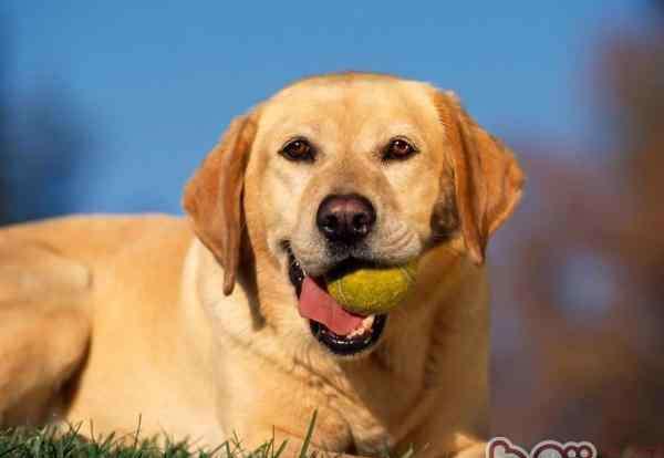 如何训练狗 在家如何训练狗狗学会基础技能