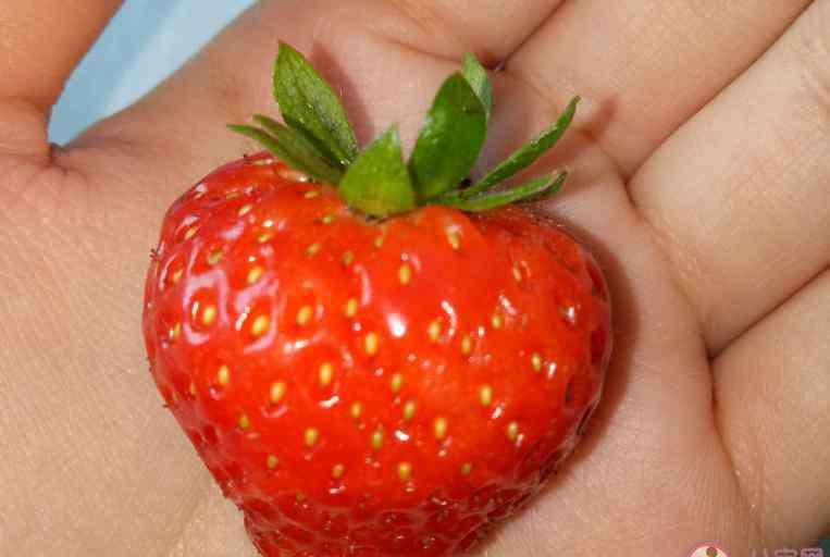 吃草莓 吃草莓发什么心情句子 2020吃草莓发什么说说感慨