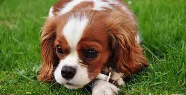 狗狗的30种情绪表达 狗狗表达情感的方式都有哪些?