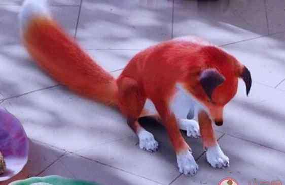 东华帝君凤九感情分析 《三生三世枕上书》东华什么时候知道凤九是小狐狸的  东华怎么知道小狐狸就是凤九的
