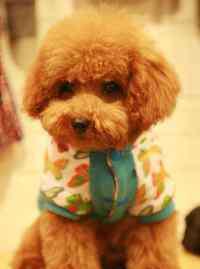 巴吉度犬多少钱一只 巴吉度犬的优缺点,纯种巴吉度犬形态特征及性格特点
