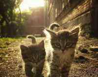 幼猫是几个月到几个月 小猫多大适合带回家,幼猫几个月体重就是几斤么