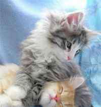 猫反感你的表现 说明它已经很讨厌你了,如果你家的猫咪有这几种表现