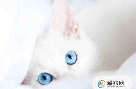 猫咪对主人会有感情吗 猫咪对主人会有感情吗?