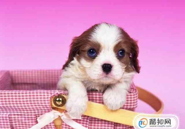 活泼的狗狗突然没精神 平日里活泼的小狗突然不吃饭了是怎么回事?