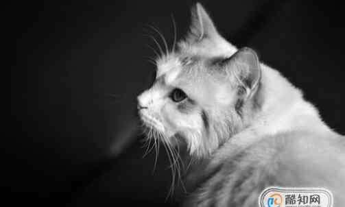 猫不吃东西怎么办 布偶猫不吃东西怎么办呢?