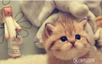 幼猫吃什么 幼猫吃什么才能健康的成长