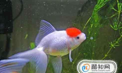 鱼的白点病会自愈吗 如何治疗观赏鱼身上的白点病