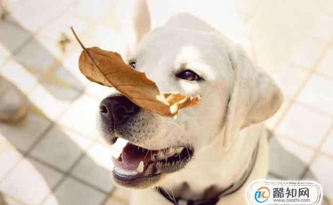 小狗呕吐是什么原因 初步辨别狗狗呕吐是什么原因引起的?