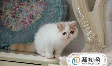 加菲网 加菲猫怎么养