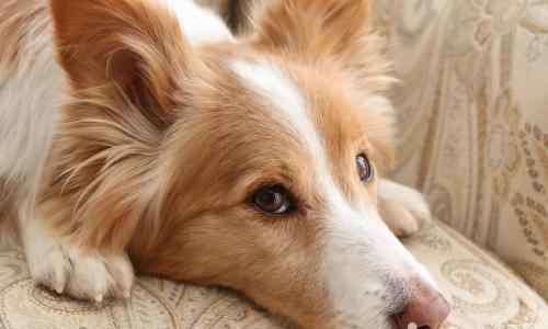 给狗狗洗澡注意什么 夏天给狗狗洗澡的注意事项都有哪些