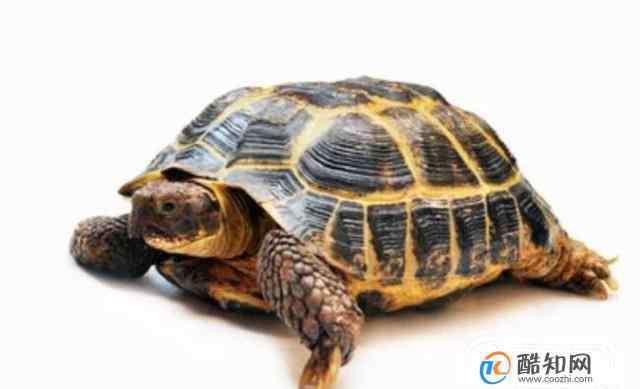 乌龟的种类 怎么区分乌龟的种类?