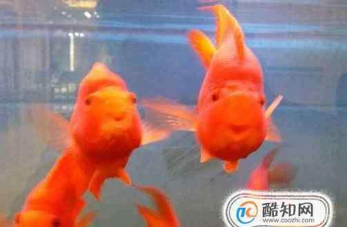 什么鱼好养 什么鱼好养?