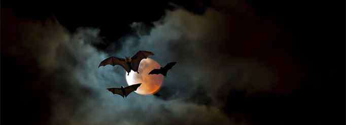 蝙蝠超声波 为什么蝙蝠能发出超声波?