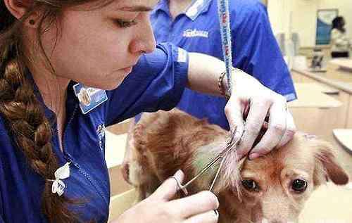 狗狗皮肤病有哪几种 狗狗皮肤病都有哪几种?