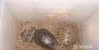 家庭养龟 家庭养乌龟如何过冬?