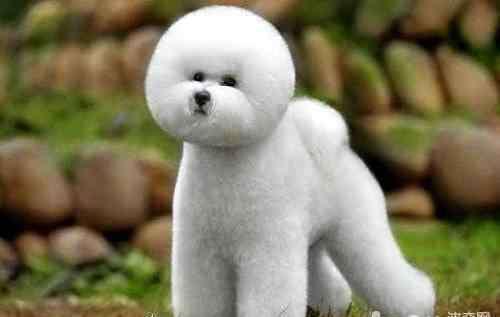 空运狗狗多少钱 空运狗狗多少钱?空运狗狗价格