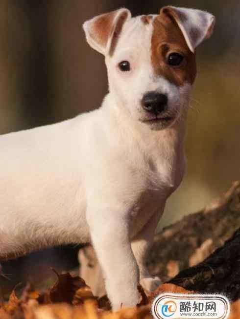 宠物养殖 常见可以选择饲养的宠物有哪些?