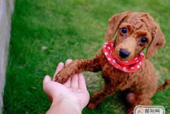 狗能吃柚子吗 狗狗吃什么水果好,狗狗吃柚子要注意什么