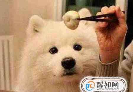 狗狗营养餐做法大全集 狗狗营养餐做法