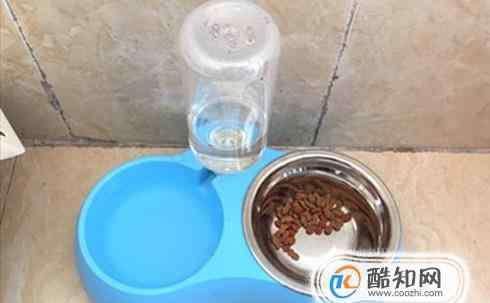 每天喝多少水合适 小狗一天喝多少水合适