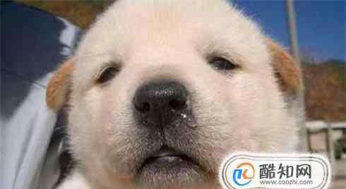 小狗感冒能自愈吗 2个月狗狗感冒怎么办,2个月狗狗感冒能自愈吗
