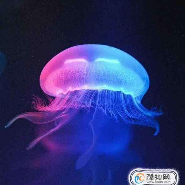 水母怎么养 水母应该怎样科学养殖?