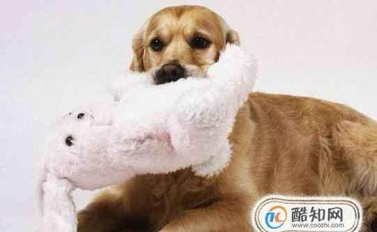 好养的宠物 适合上班族养的宠物有哪些?上班族养什么宠物好
