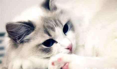 猫吐出来的毛球图片 猫咪吐出一滩水是在吐毛球吗?