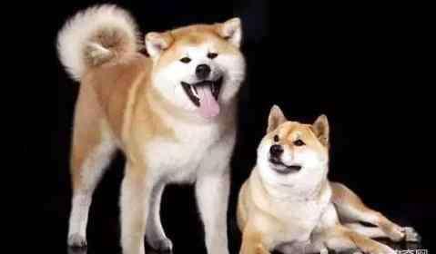 做狗的开始 小狗多大要开始驱虫?