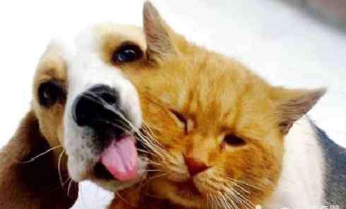 狗狗一切正常就是鼻子干 狗鼻子干怎么解决?狗鼻子干是怎么回事?