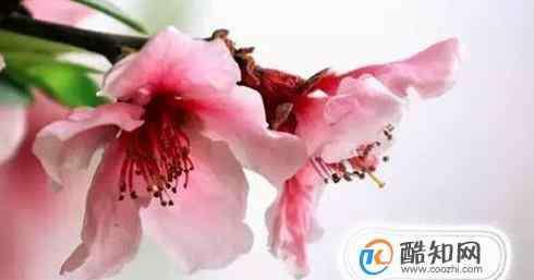 犯桃花是什么意思 犯桃花是什么意思
