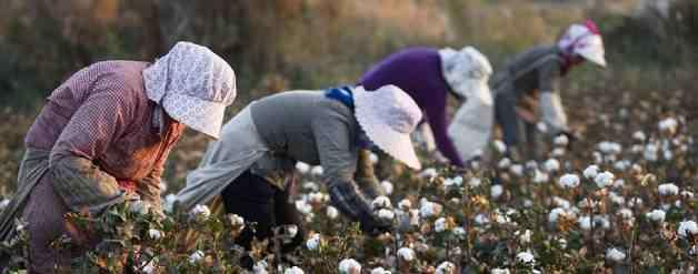 新疆棉花 新疆摘棉花是什么梗?