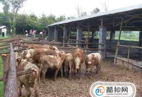 牛棚 保暖牛棚怎么建