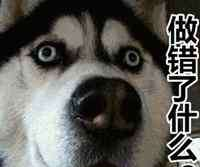 狗狗能吃巧克力吗 狗狗能不能吃巧克力吗?为什么?