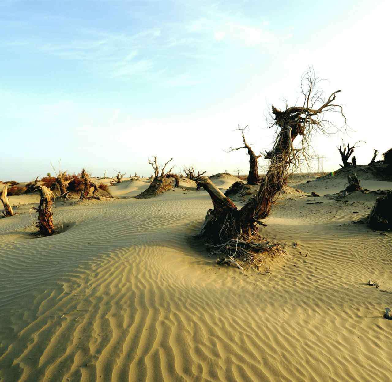 死亡之海是哪个沙漠 死亡之海是哪个沙漠?