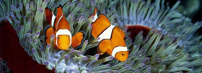 盐水鱼 为什么有淡水鱼和盐水鱼之分?