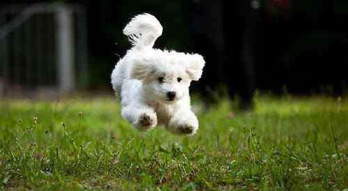男狗狗名字 男狗狗英文名 男狗狗英文名有什么