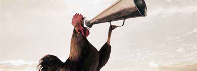 公鸡打鸣 公鸡为什么打鸣?
