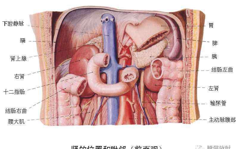 身体疼痛器官图解 疼痛与器官: