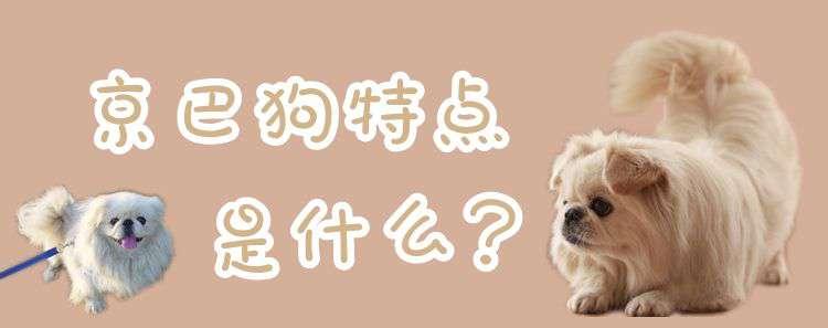 京巴狗特点 京巴狗特点是什么