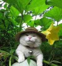 公猫发情了怎么办 以下几点帮你解决难题,如果你的猫咪发情了怎么办