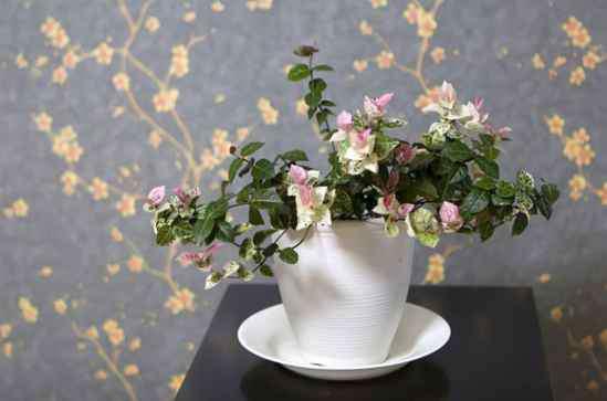 室内花卉图片大全 室内花卉图片大全 展示6种适合在室内养的植物