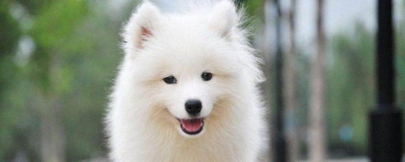 会笑的狗 会笑的狗叫什么名字