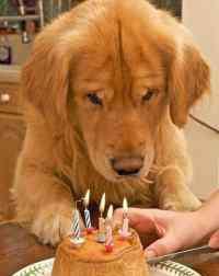 四环素眼膏 可涂抹四环素眼膏,解决狗狗的结膜炎的巧妙方法(图)