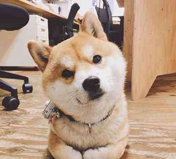 狗是色盲吗 狗是色盲吗?