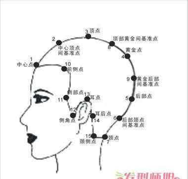 头发量正常标准图 头部15个点位置标准图 头部15个设计点的认识