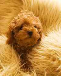 狗鼻子湿润正常吗 狗鼻子湿润好还是干燥好,狗狗鼻子特别湿有水正常吗