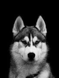 串串狗的缺点 串串狗也有很多的优点,三个月的串串狗体型就如此巨大